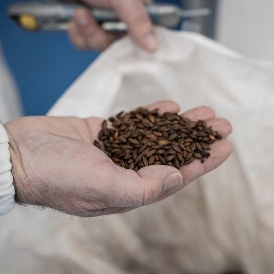 Birrificio Sardegna, Birrificio Artigianale Sardegna, Birra Artigianale Sardegna, Birra Artigianale Sarda
